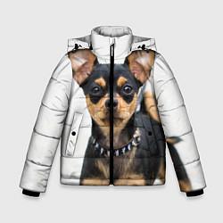 Куртка зимняя для мальчика Чихуахуа цвета 3D-черный — фото 1