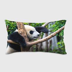 Подушка-антистресс Бамбуковый медведь цвета 3D — фото 1